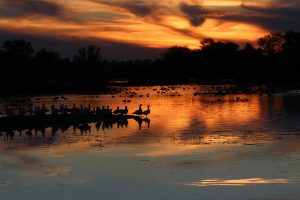 """28B_RiggeLisa_Snow Geese at Sunset_Color Photography_16-x20"""""""